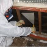 Asbestos Survey.1